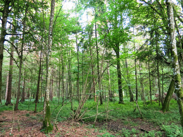 Białowieża National Park which spans 350,000 acres in Poland and Belarus is a protected UNESCO World Heritage Site.