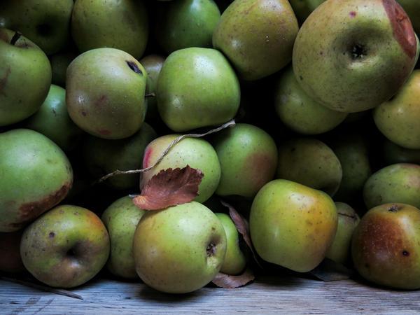 Apples used for hard cider.