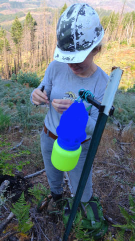 <p>Sydney Watkins checks a blue vein trap for native bees on BLM land.</p>