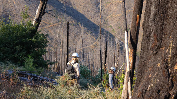 <p>Field research in the Douglas Complex burn scar is looking to see how native bees respond for different fire severity. </p> <p> </p>
