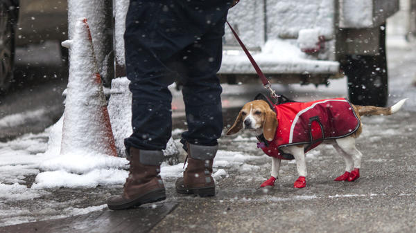A man walks his dog during a snowstorm last February in Philadelphia.