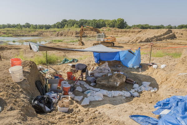 Archaeological dig on the site of the discovery of a Columbian mammoth near Italy, Texas.