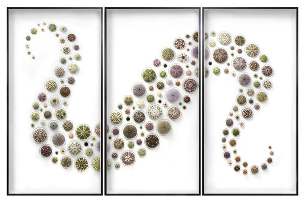"<em>Urchin Triptych</em> is one of hundreds of Christopher Marley artworks on display at the Gallery of Amazing Things' ""Biophilia"" exhibition."
