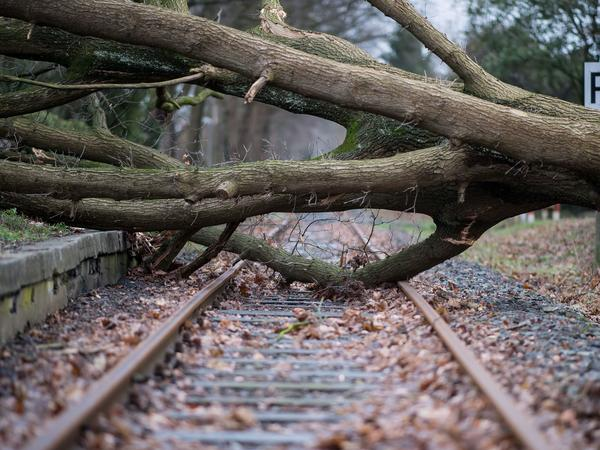 An uprooted tree lies on the rails in Muenster in northwestern Germany. The storm whipped up winds as high as 126 mph.