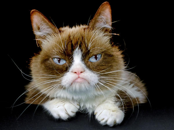 Grumpy Cat appears unimpressed posing for a photo during an interview at The Associated Press bureau in Los Angeles in December 2015.