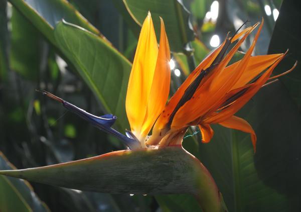The Mediterranean display at the Royal Botanical Gardens in Burlington Ontario Canada