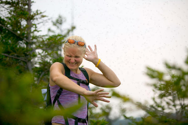 A female hiker is attacked by bugs on the Welch-Dickey trail.