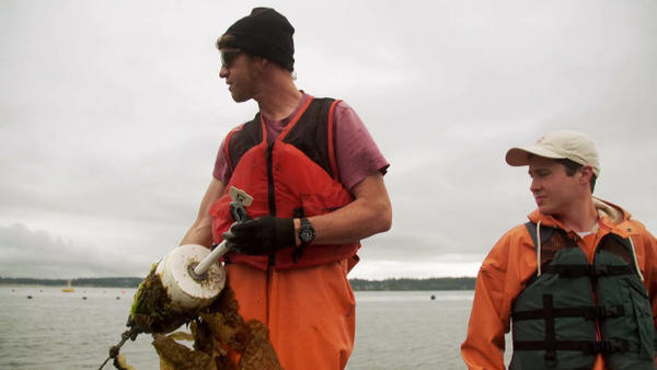 <p>Brian Allen (left) and Ryan Cox of the Puget Sound Restoration Fund pull kelp lines on Hood Canal.</p>