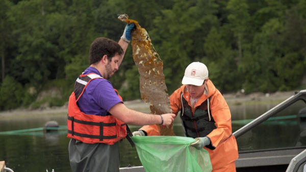 <p>Stephen Schreck (left) and Ryan Cox of Puget Sound Restoration Fund collect kelp samples.</p>