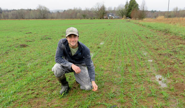 Farmer Evan Mulvaney in a soggy field of triticale, a hybrid of wheat and rye grown for fodder.
