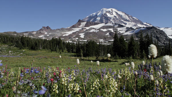 <p>An alpine meadow in Mount Rainier National Park.</p>