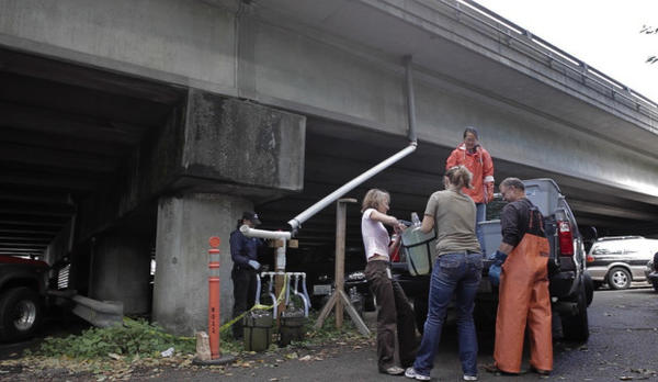 <p>A team of researchers gathers runoff from a highway in Seattle in 2012 to study the impacts of urban stormwater on aquatic life.</p>