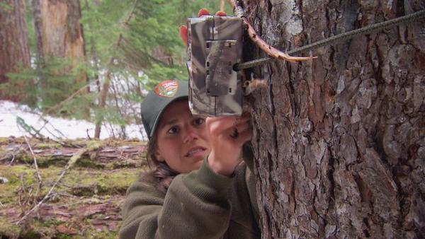 <p>Trail cameras are used to locate fishers in the Washington Cascades.</p>