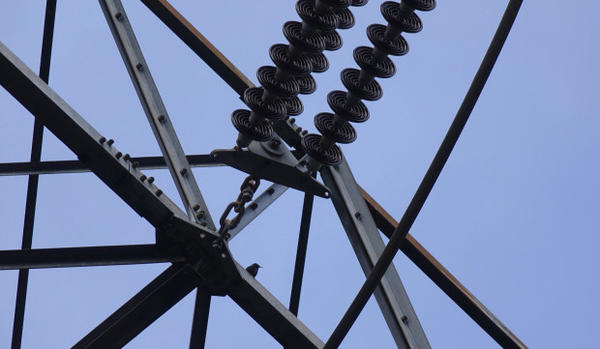 <p>A small songbird perches on a PGE transmission tower near Sherwood, Oregon.</p>