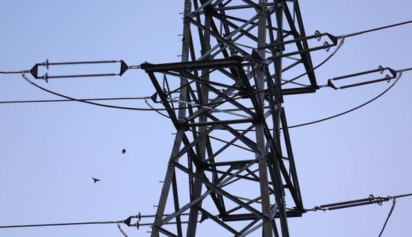 <p>Small birds swarm a PGE transmission tower near Portland.</p>