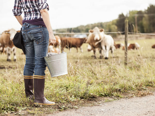 Someday, we might be able to customize the microbes we feed cows to help reduce their methane emissions.