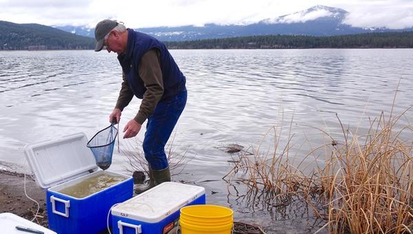 <p>Alan Mikkelsen, the senior advisor to Interior Secretary Ryan Zinke, releases captive-raised endangered sucker fish into Upper Klamath Lake.</p>