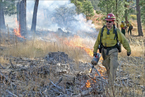 File photo of a firefighter using a driptorch to apply fire during a prescribed burn.