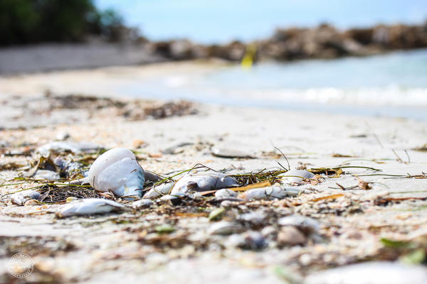 More than just an unsightly beach experience, red tide has a far-reaching economic impact on beach communities.