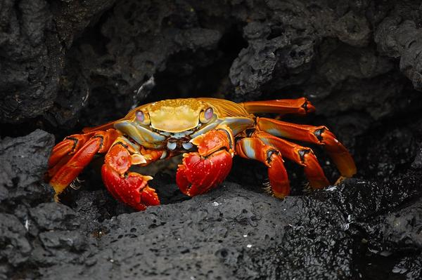 The crab from the Disney movie about mermaids is pretty optimistic that everything's better under the sea. Humans -- no fins, no gills -- aren't always so sure.