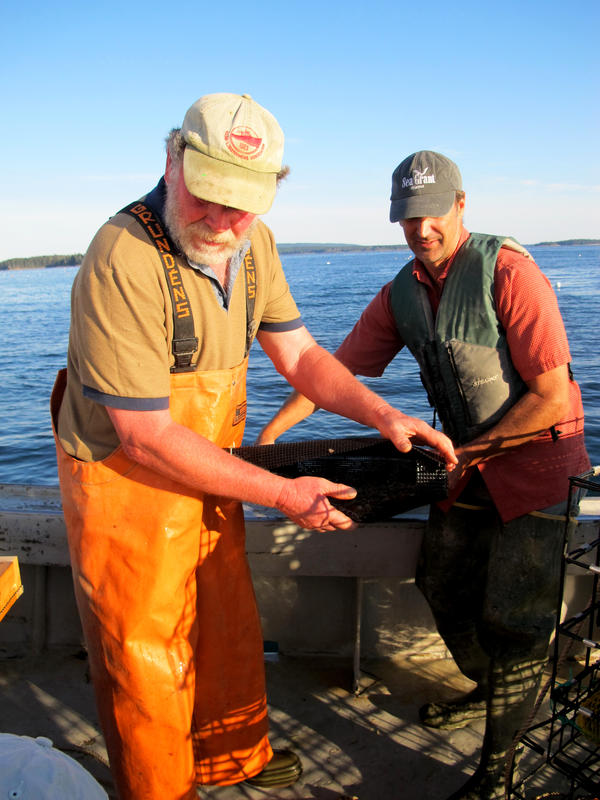 Fisherman Marsden Brewer (left) and researcher Dana Morse are still refining their techniques for sea scallop farming.