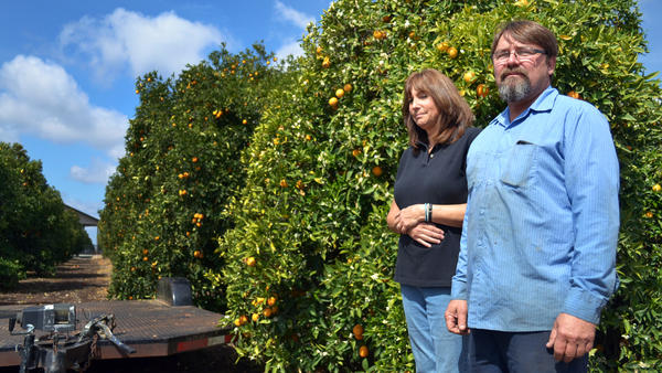 Recent rains kept Suzanne and Mike Collins' orange grove alive, but the rainy season is ending. If they don't get federal irrigation water by this summer, their trees will start dying.