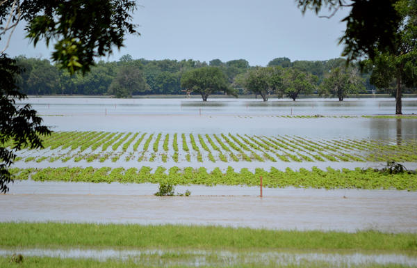 Farmers in Texas have gone from having to deal with too little water to too much.