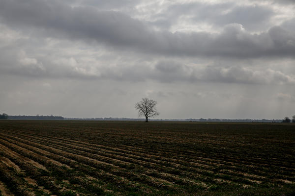 Fields near Greenville, Miss., a small city along the Mississippi river where Chinese immigrants have come for more than a century.