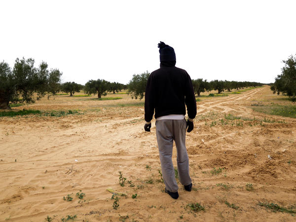 Mohammed works in an olive grove in southern Tunisia after he escaped from slavery in Libya. He's still afraid of the men who held him in Libya, so he asks not to be identified.