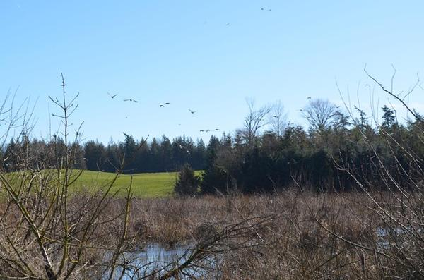 <p>Whatcom County dairy farmer Steve Groen has sixty acres of woodlands and wetlands on his land.</p>