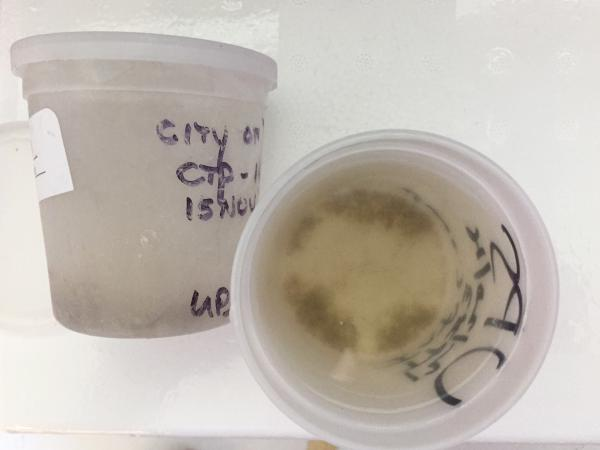 A sample of wastewater collected over 24 hours from a Washington city's wastewater after defrosting and just before chemical analysis. Solids in the sample can be seen settled at the bottom of the container.