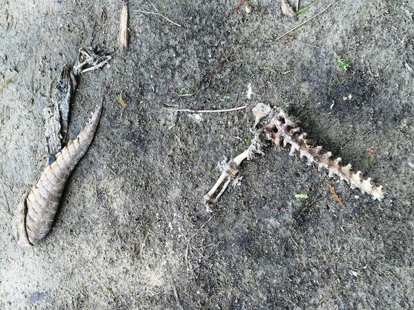 Alligator remains along Lake Russell