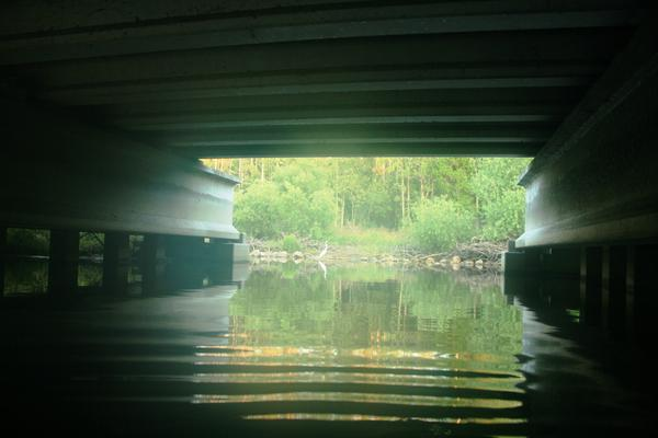 There's a narrow wildlife underpass at Reedy Creek beneath Interstate 4