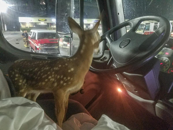 A Monroe County firefighter saved a Key deer fawn from a brushfire on Big Pine Key. The fawn was released in an unburned area.