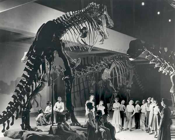 "When the <em>T. rex</em> skeleton was first put on display, it was presented standing vertically, in this Godzilla-like pose, as seen at the Carnegie Museum of Natural History around 1950. Recent studies show the dinosaur actually kept its body horizontal. <a href=""http://www.npr.org/templates/story/story.php?storyId=139955265"">Watch the videos here to see how <em>T. rex</em> walked.</a>"