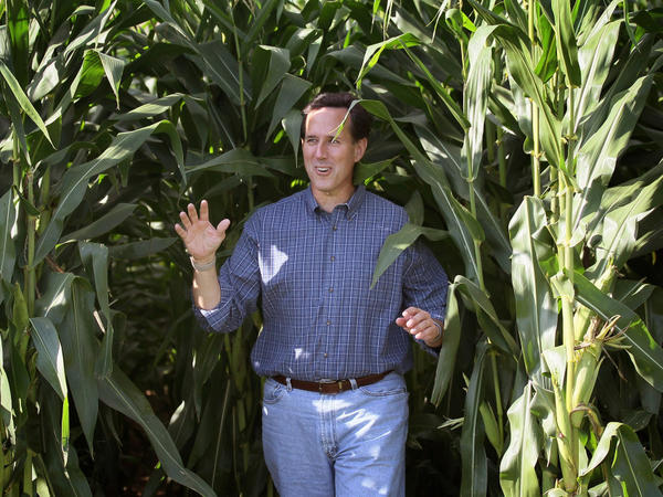 GOP presidential candidate Rick Santorum emerges from a cornfield during an August campaign stop in Dyersville, Iowa, at the farm where the movie <em>Field of Dreams</em> was filmed.