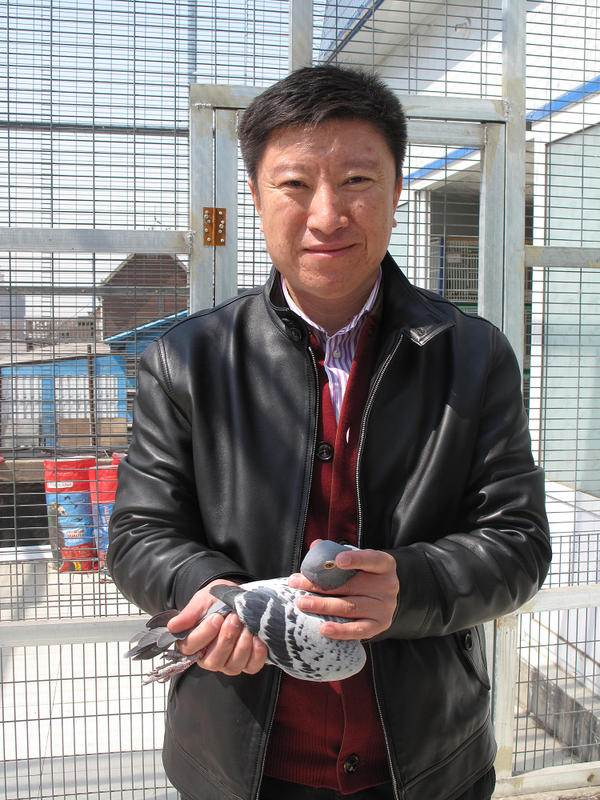 Xing Wei, who raises pigeons for lucrative races in China, is shown in Beijing with his favorite bird, Ike. He sells Ike's offspring to wealthy buyers for $15,000.