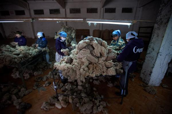 The herdsmen's livestock also supply Mongolia's cashmere manufacturers, traditionally one of the country's main industries. At the Gobi cashmere factory in Ulan Bator, workers sort through newly arrived piles of goat fur, sorting by color and texture.