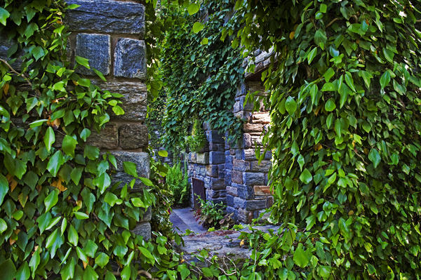 Shrubbery lines the roofless stone walls of the Ruin.