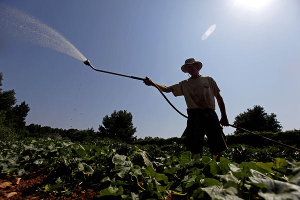 Doug Jones, owner of Piedmont Biofarm in Pittsboro, N.C., waters vegetables Friday as temperatures in the South soar. Triple-digit temperatures are expected for several days in North Carolina.