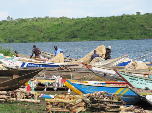 At Osindo Beach, local fishermen come in from fishing on Lake Victoria. Some fishermen are reluctant to get circumcised because they would miss three days of work.