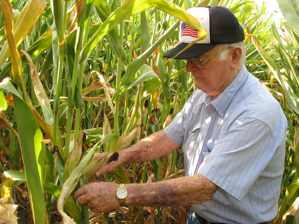 Charles Hildenbrand surveys the family's corn crop outside Thawville, Ill. He doesn't remember much from the Dust Bowl days, but says technology has saved what little corn the farm does have this year.