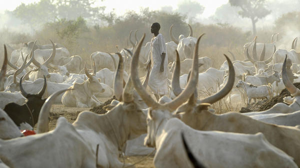 A man from the Mundari nomad tribe stands among cattle on Jan. 18, in Juba, South Sudan. Cattle raids, a common occurrence in the region, have grown increasingly violent in recent years.