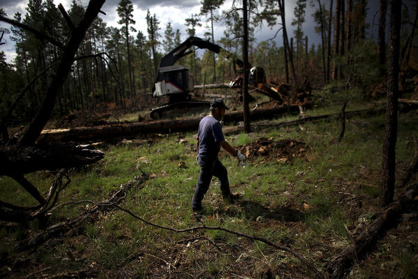 A worker walks by a feller buncher, a heavy machine used to clear timber, in a section of Apache-Sitgreaves National Forests. Covington's group is trimming the forest to make it more fire-resistant.