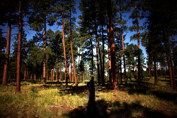 The Forest Service is thinning and treating the forest around the Sierra de los Pinos neighborhood in the Jemez Mountains, west of Los Alamos, N.M. The goal is to reduce the threat posed by future megafires.