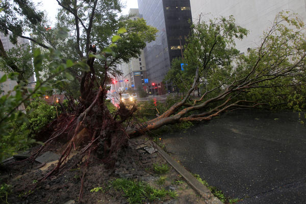 An uprooted tree lies across Poydras Street in downtown New Orleans. Isaac packed 80-mph winds, making it a Category 1 hurricane.