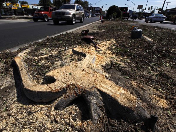 A stump remains in the median of Manchester Boulevard as workers remove trees to clear a path for the space shuttle Endeavour in Inglewood, Calif., Tuesday. Residents are upset that 400 trees might be cut down to allow the shuttle to travel from the airport to its new home at a science center.