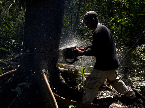 Agustin Villa cuts down a tree in the Amazon jungle, in Santa Cruz province, Bolivia, 2012.