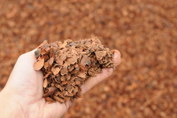 Cocoa shells from a Hershey's chocolate plant in Hershey, Pa., are just one ingredient in the compost that mushroom growers use to feed the fungi.