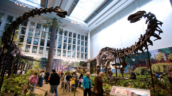 Apatosaurus (right, opposite a <em>Diplodocus</em> skeleton at the Carnegie Museum of Natural History in Pittsburgh), is what paleontologist Othniel Charles Marsh actually found when he thought he'd discovered the Brontosaurus.